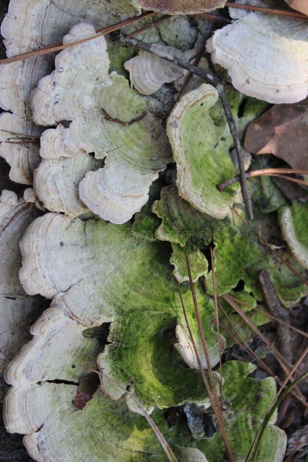 得克萨斯植物 库存图片