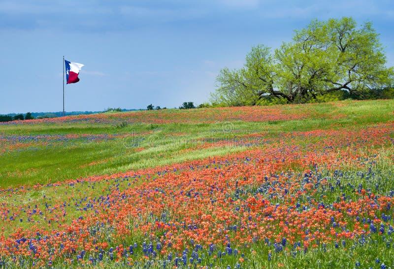 得克萨斯矢车菊和印度画笔的开花的领域 图库摄影