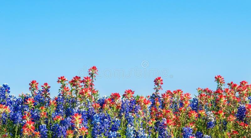 得克萨斯矢车菊和印度画笔野花 免版税库存图片