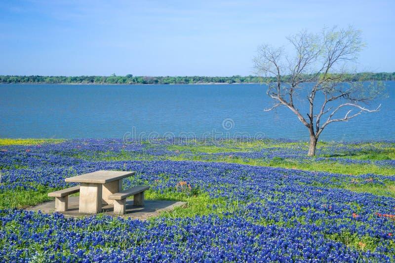 得克萨斯矢车菊围拢的野餐桌 库存图片
