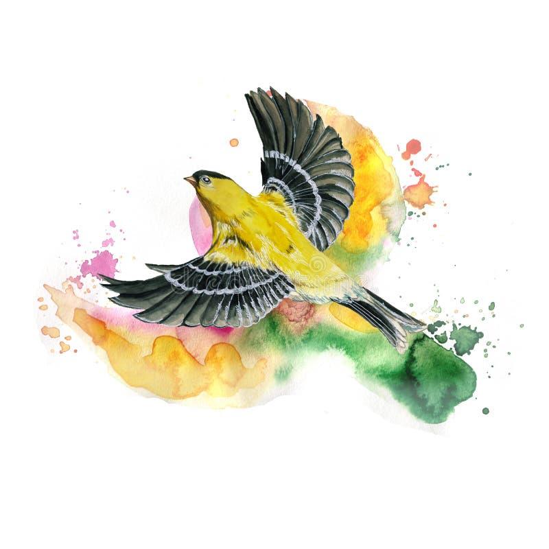 得出在春天,热,奥廖拉诺飞行一个象麻雀的舰队的鸟的例证题材的水彩无缝的样式  向量例证