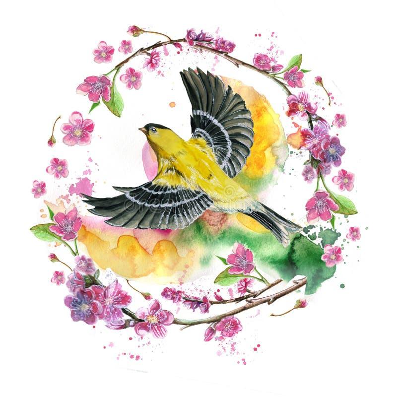 得出在春天,热,奥廖拉诺飞行一个象麻雀的舰队的鸟的例证题材的水彩无缝的样式  库存例证