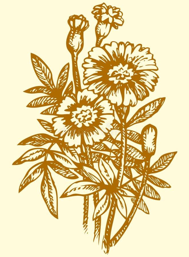 得出花卉草向量的背景 明亮的黄色开花的Tagetes 向量例证
