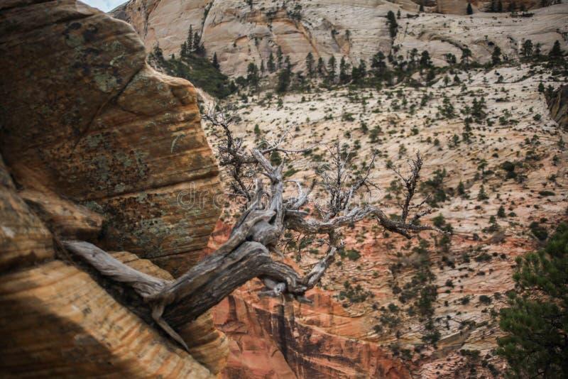 得到接近天使` s登陆的点的锡安峡谷 库存图片