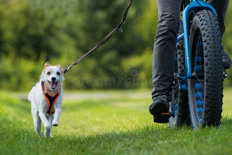 循环与一条小的混杂的品种狗 免版税库存照片
