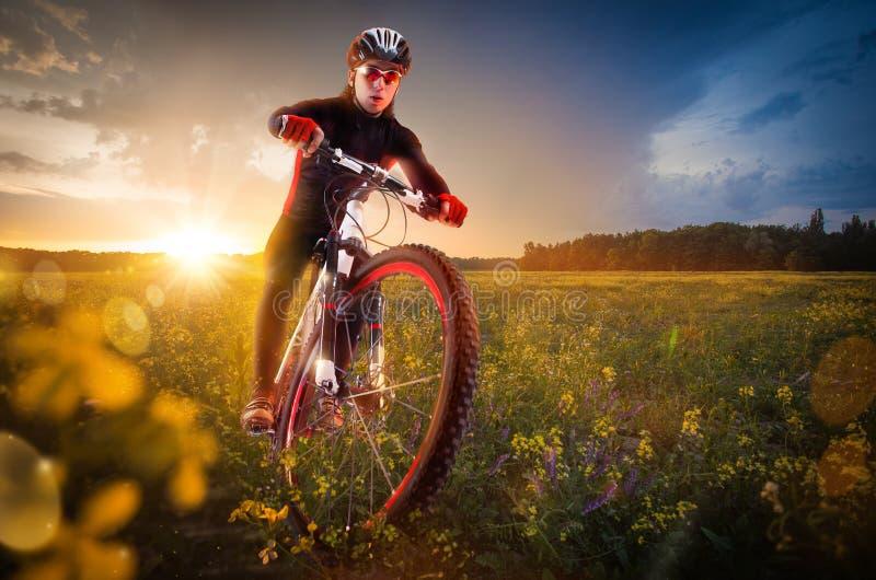 循环在美丽的草甸 库存照片