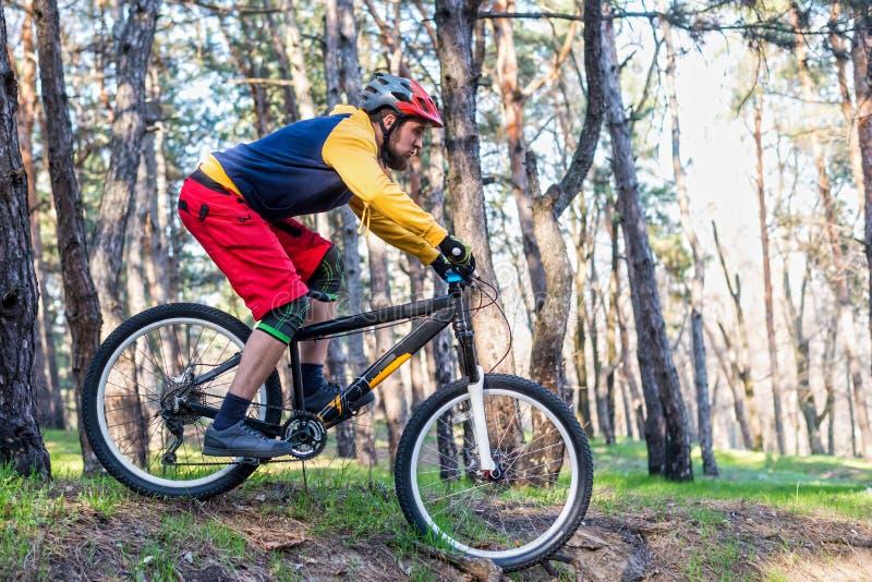 循环,骑登山车的明亮的衣裳的一个骑自行车者通过森林 有效的生活方式 库存图片