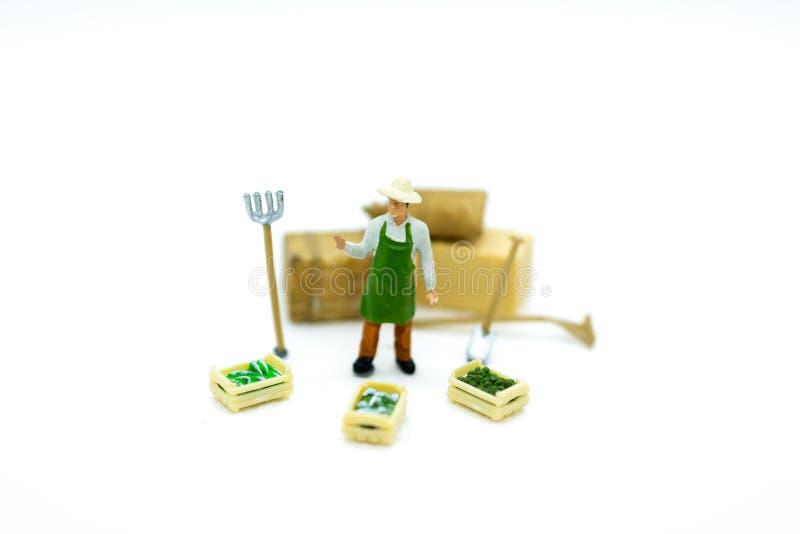 微型人民:有篮子菜的,果子农夫 农业庄稼的图象用途 免版税图库摄影