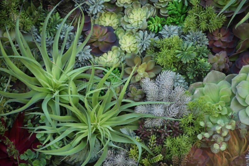 微型多汁植物,盘子的庭院 免版税库存图片