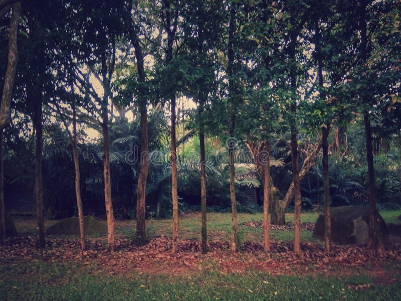 微型森林 免版税库存照片