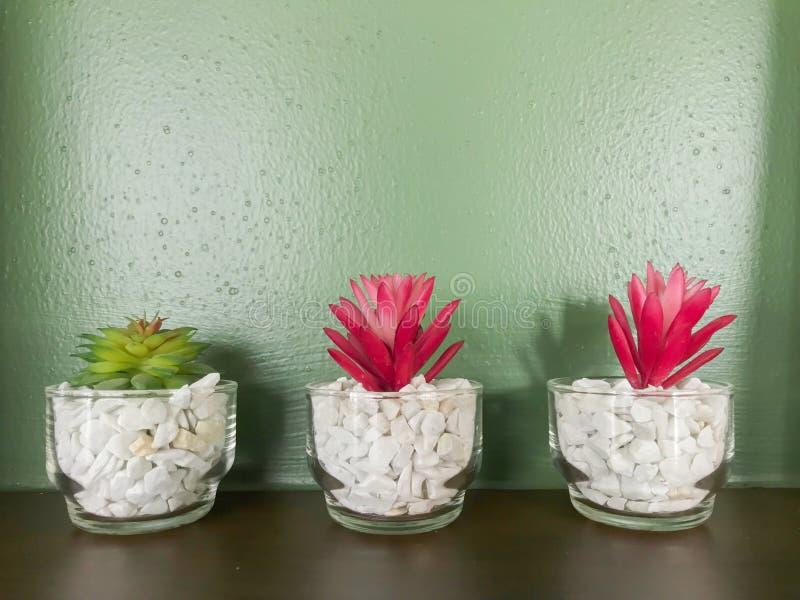 微型植物红色和绿色在玻璃 图库摄影