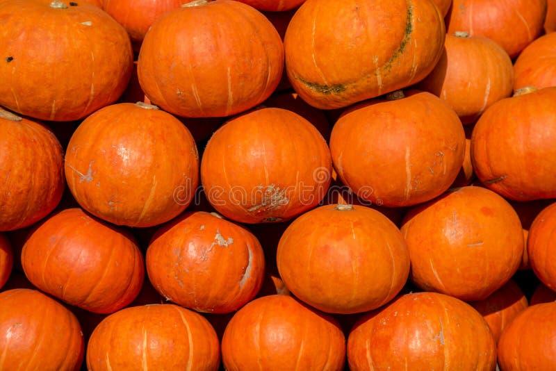 微型橙色南瓜散装在秋天的农夫市场上 库存照片