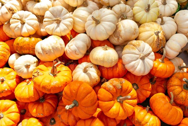 微型橙色和白色南瓜 库存照片