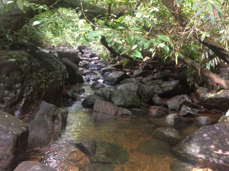 微型水秋天斯里兰卡 免版税库存照片