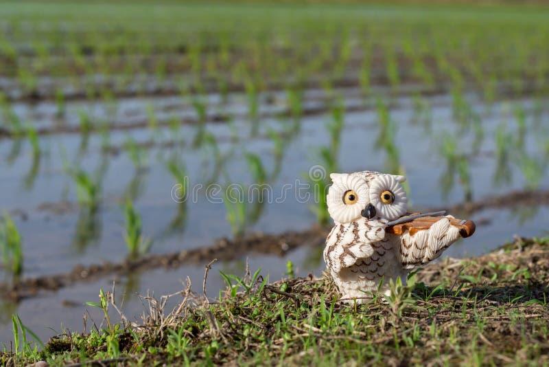 微型白色猫头鹰小雕象在最近被种植的米领域背景中的弹小提琴 库存图片