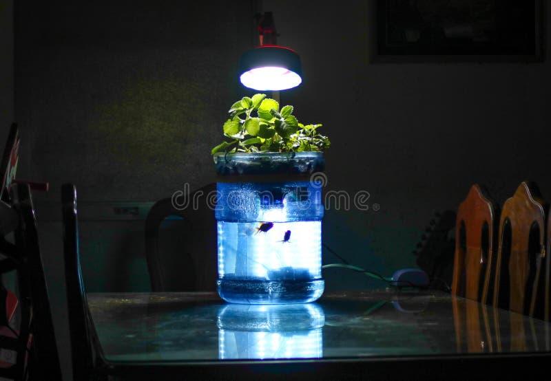 微型aquaponics项目 库存照片