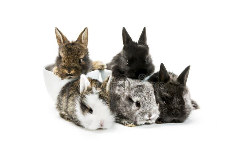 微小的兔子 免版税库存图片