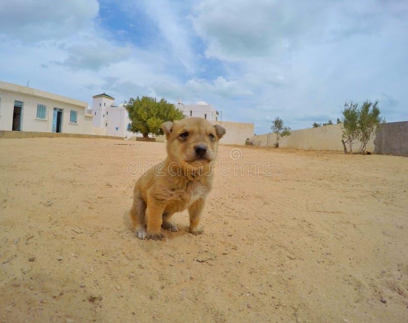 微小的小狗 库存照片