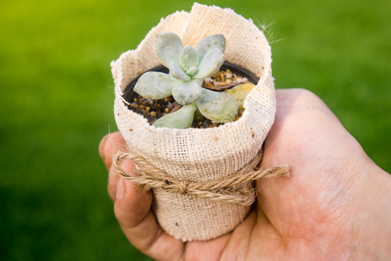 微小的植物罐 免版税库存图片