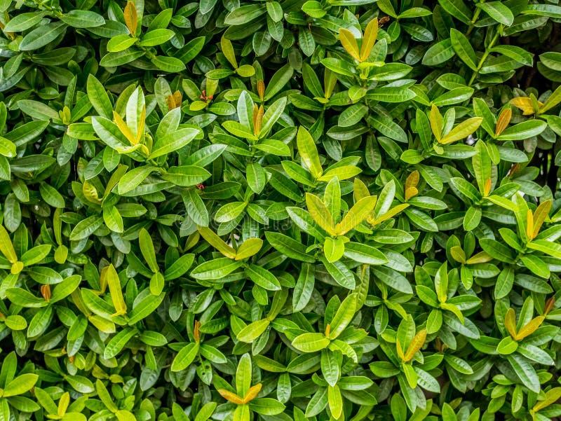 微小的绿色叶子瓦片 库存照片