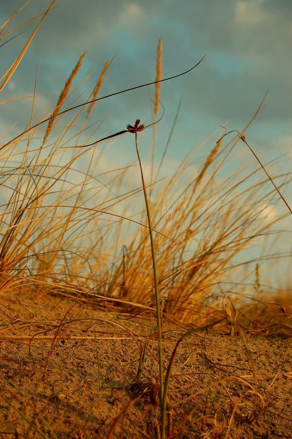 微小花的沙子 免版税库存图片
