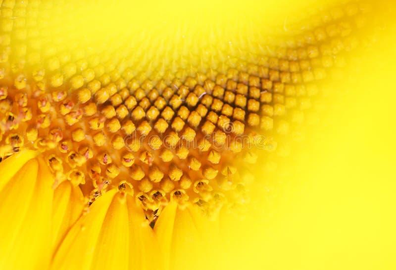 微笑向日葵 库存图片
