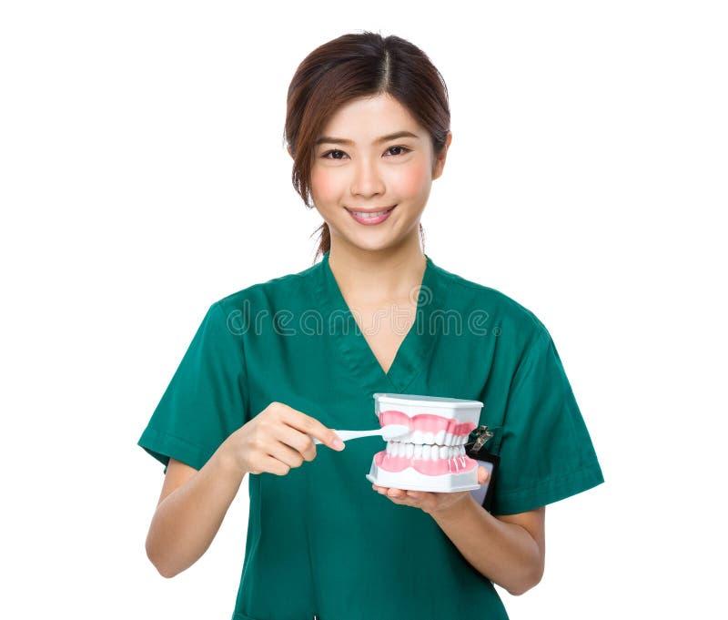微笑妇女牙医医生教您刷子牙 免版税库存图片