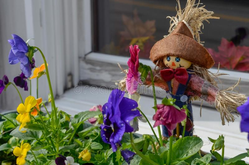微笑的小windowbox稻草人和黄色和purle panseys 库存图片