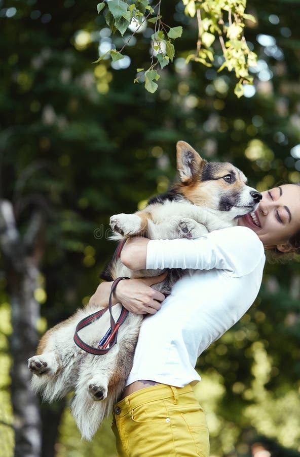 微笑的年轻女人笑,拿着逗人喜爱的狗威尔士小狗在公园户外 在狗的焦点 免版税库存图片