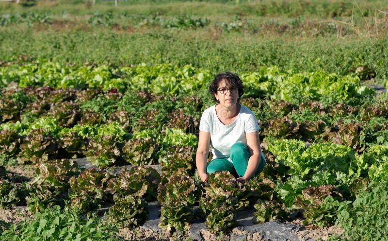 微笑的深色的妇女采摘莴苣沙拉 库存图片