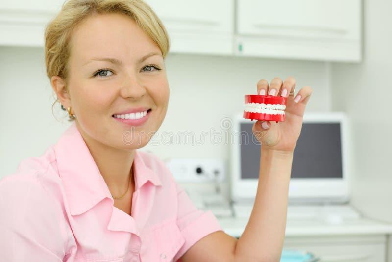 微笑的牙科医生保留玩具下颌 免版税图库摄影