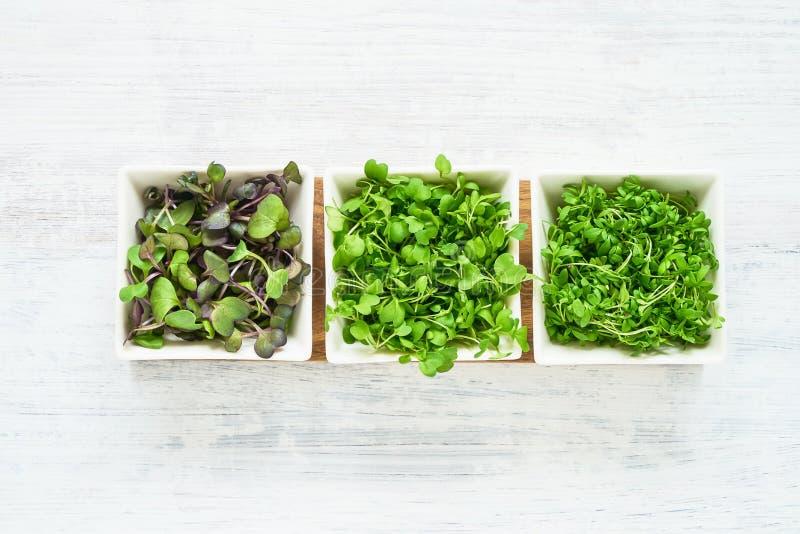 微绿色的分类在白色背景的 发芽的萝卜,芥末,水芹在白色碗的莴苣种子 r 库存照片