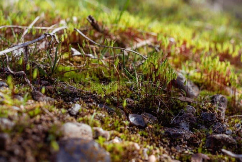 微观世界 绿色植物,叶子,石头 在我们的脚下是整个宇宙 免版税库存图片