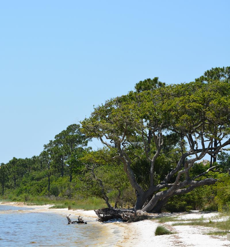微风湾海岸在墨西哥湾的,美国圣罗萨县佛罗里达 库存照片
