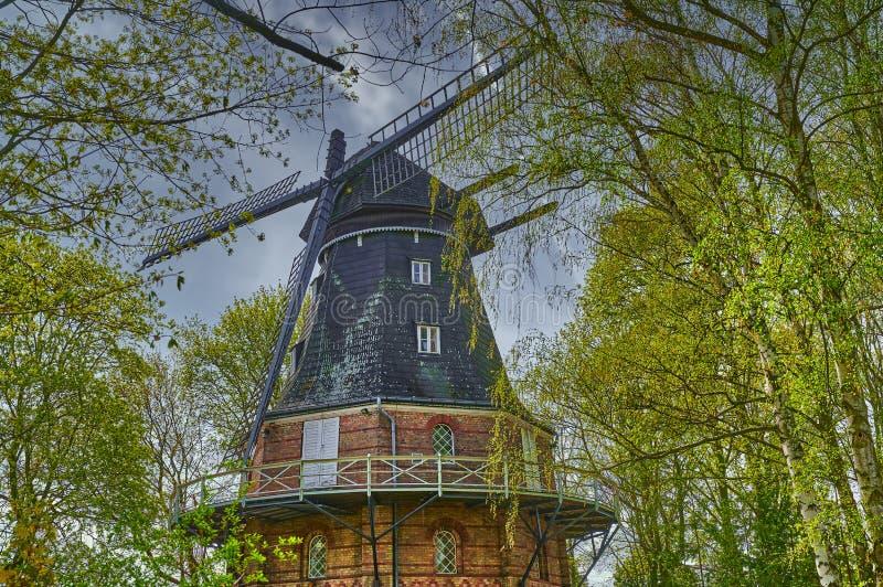 德国柏林一座历史悠久且经过修复的风车,位于桦树之间 免版税库存照片