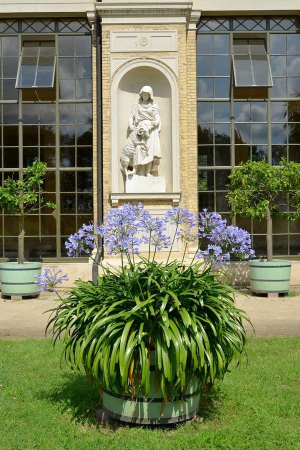 德国波茨坦 以一个雕塑为背景的开花的非洲百合在温室宫殿的适当位置 圣Su公园  图库摄影