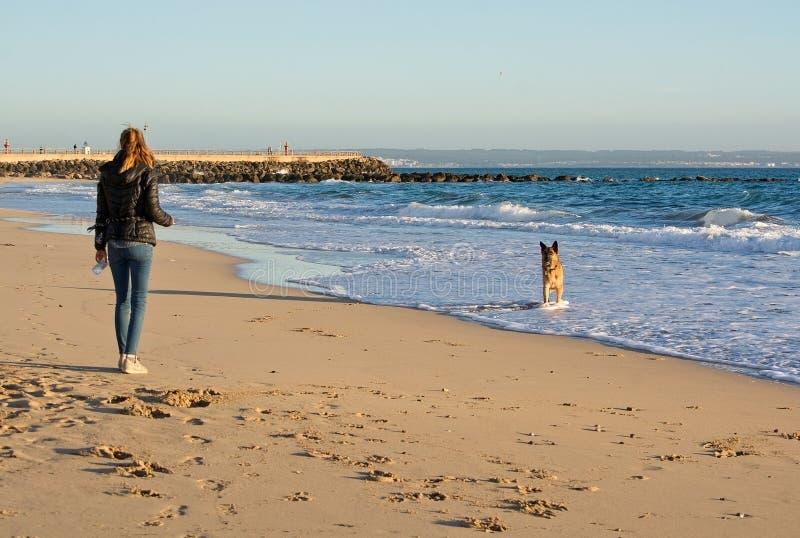 德国牧羊犬在海滩的狗戏剧 库存图片