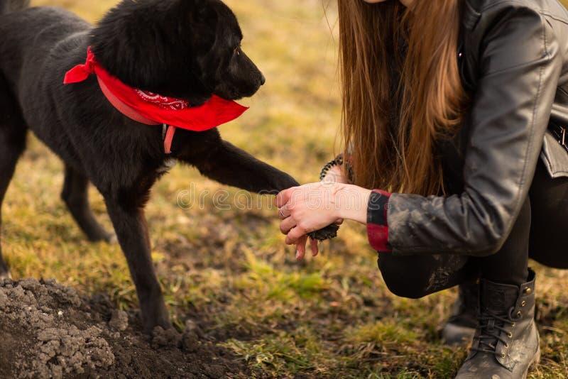 德国牧羊犬狗Brovko走在与他的女主人的领域的Vivchar 免版税库存图片