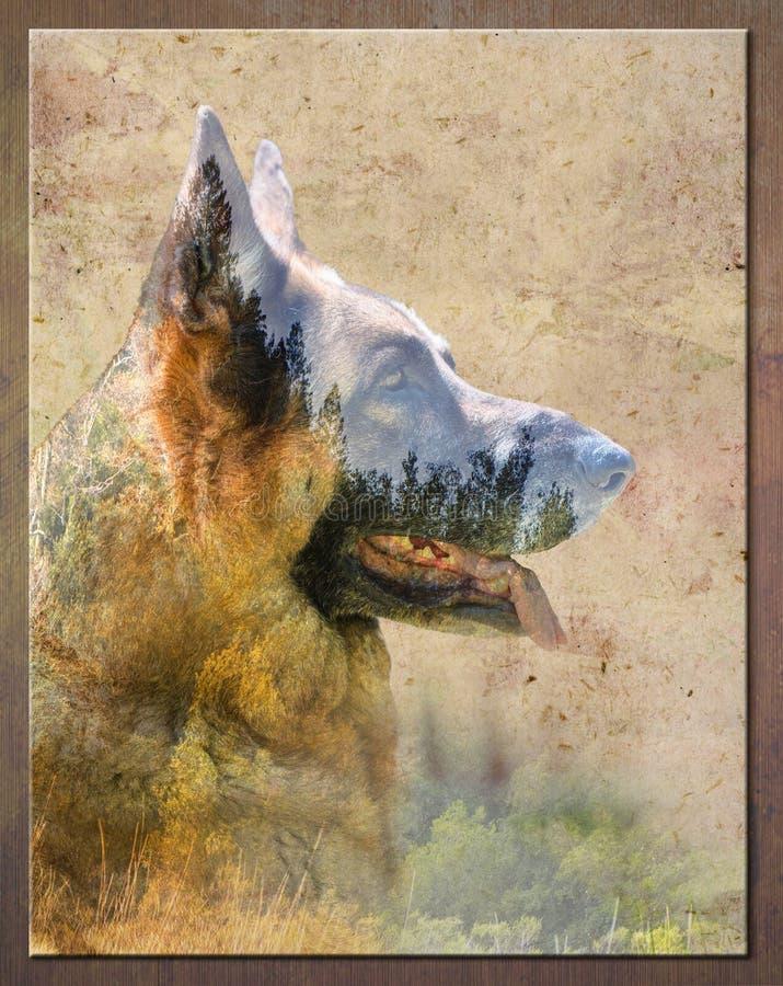 德国牧羊犬野外肖像 自然艺术 免版税库存照片