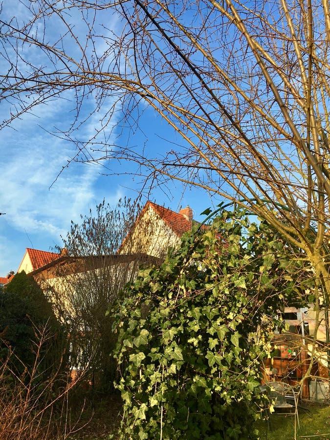 德国coverd的一个庭院与常春藤属螺旋 图库摄影
