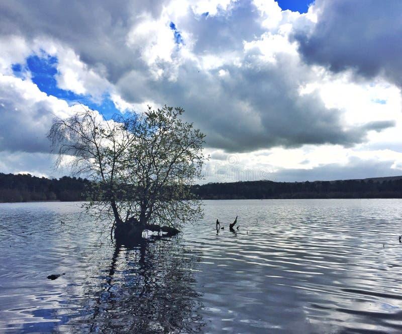 德拉梅尔森林湖 库存照片