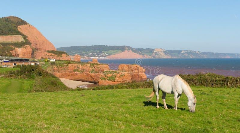 德文郡海岸白色小马和砂岩岩石堆积Ladram海湾英国英国位于在Budleigh Salterton和Sidmouth之间 免版税库存照片