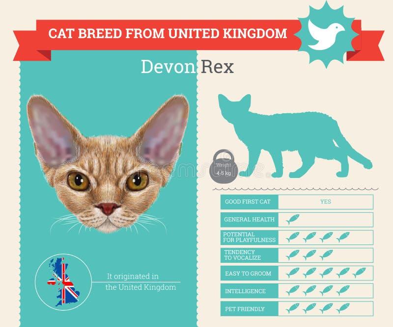 德文郡雷克斯猫品种infographics 库存例证