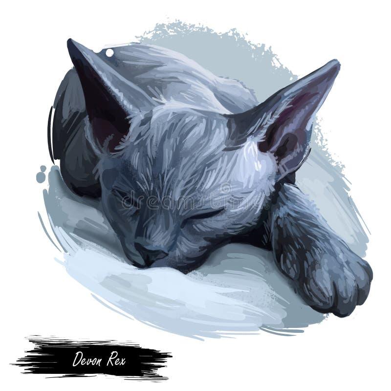 德文郡雷克斯猫画象隔绝了,数字艺术 向量例证