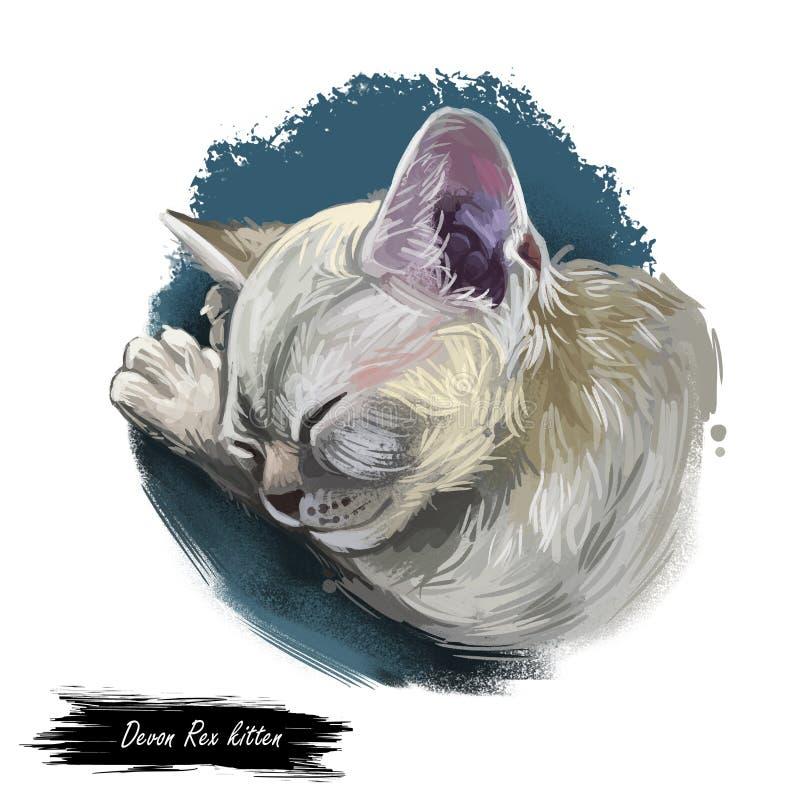 德文郡雷克斯猫画象隔绝了,数字艺术 皇族释放例证