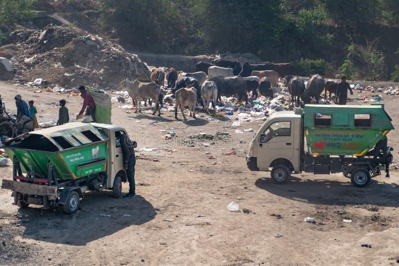 德里/印度25 02 2019年:母牛回收圈子过程 免版税库存照片