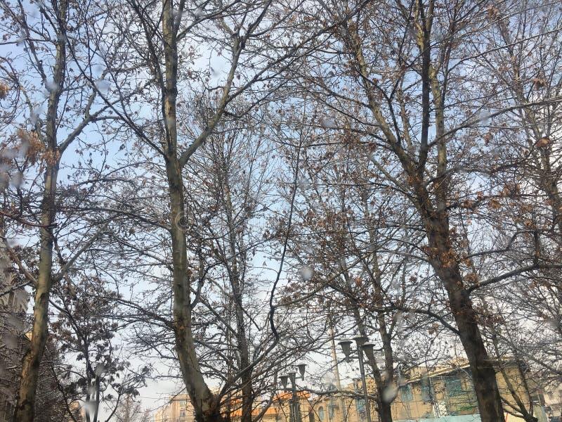 德黑兰,伊朗,冬天, KOHSAR 库存图片