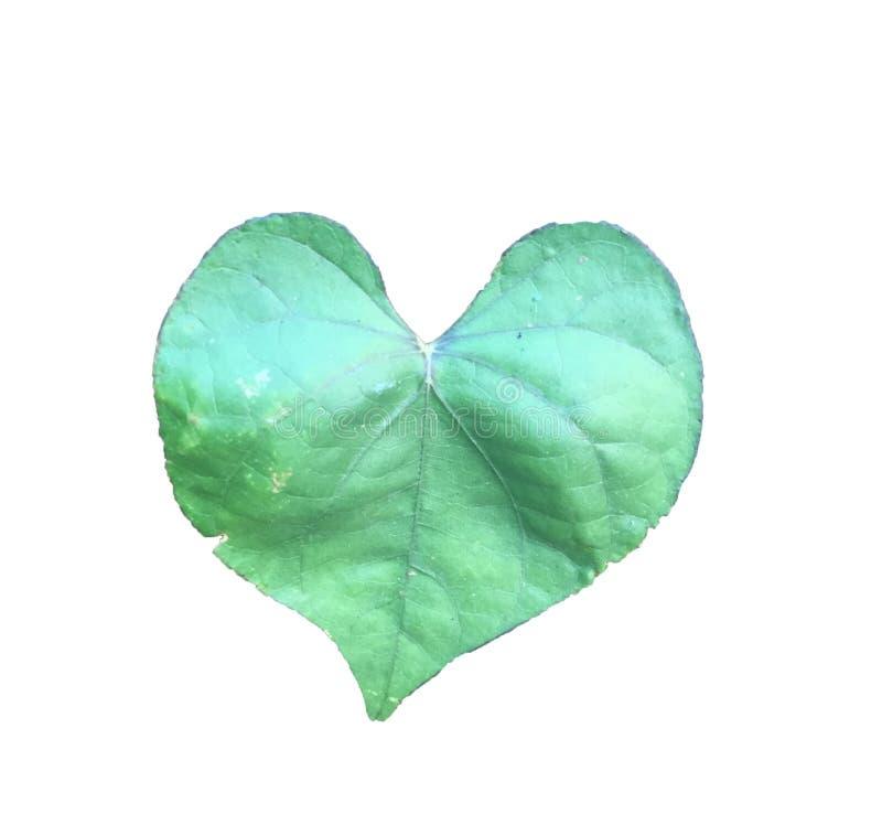 心形的叶子白色背景 向量例证
