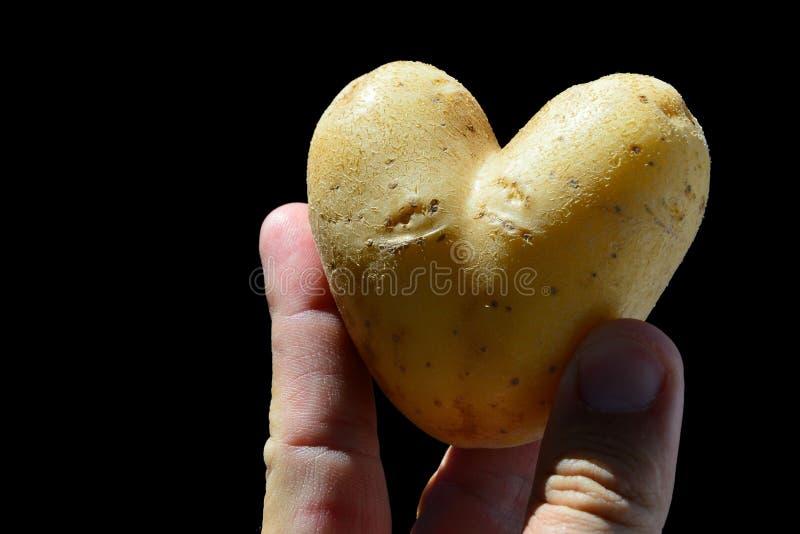 心形的土豆肿胀Solanum Tuberosum举行了在拇指和成年男性人之间,黑背景的食指 免版税库存照片