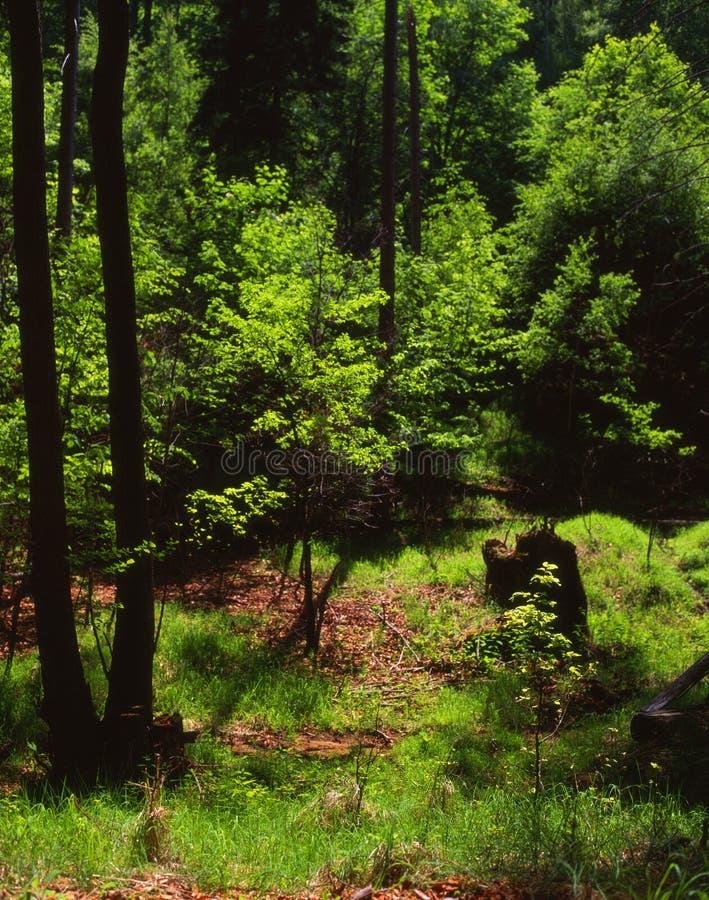 心情春天森林 库存图片
